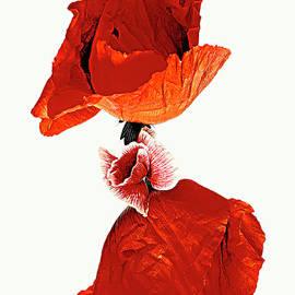 Poppies. by Alexander Vinogradov