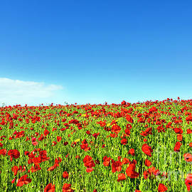 Terri Waters - Poppies and a Photographer