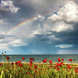 Poppies and rainbow by the sea - Evgeni Dinev