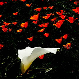 YT Photo - Poppies Can Fly