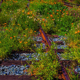 Poppies Growing Among The Rails - Garry Gay