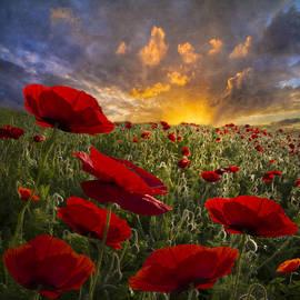 Poppy Field by Debra and Dave Vanderlaan