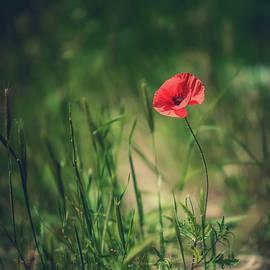 Poppy by Flo Photography