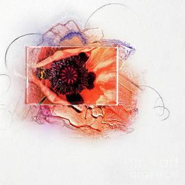Poppy Love by Gillian Singleton