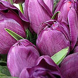 Bonita Brandt - Purple Tulips