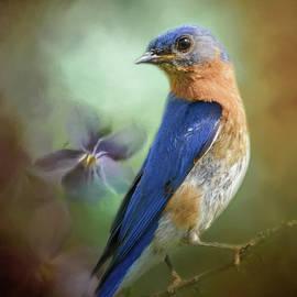 Jai Johnson - Portrait of a Bluebird