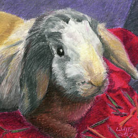 Portrait Of A Bunny by Dominic White