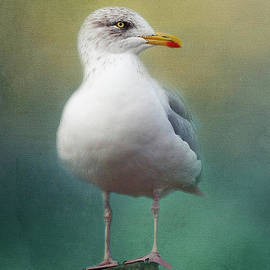 Portrait of a Seagull by Teresa Wilson