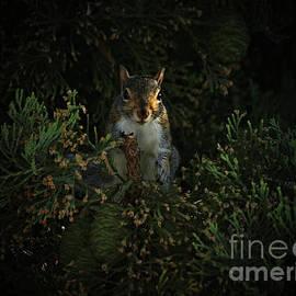 Portrait Of A Squirrel by Lance Sheridan-Peel