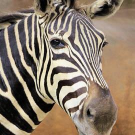 Rosalie Scanlon - Portrait of a Zebra