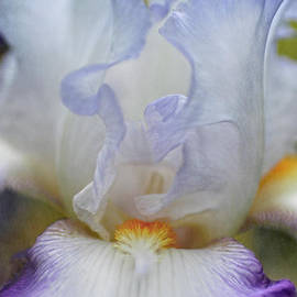 ArtissiMo Photography - Portrait of an Iris