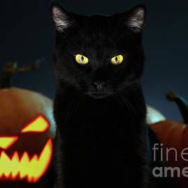 Portrait of Black Cat with pumpkin on Halloween by Sergey Taran