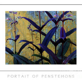 Mike Nellums - Portrait of Penstemons poster