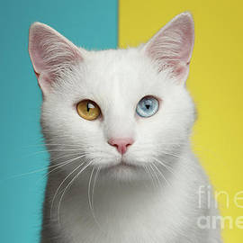 Sergey Taran - Portrait of White Cat on Blue and Yellow Background
