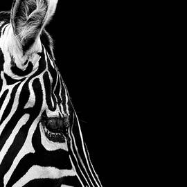 Lukas Holas - Portrait of Zebra in black and white IV