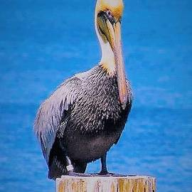 Judith L Schade - Posted Pelican