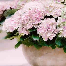 Pot of Hydrangeas by Julie Palencia