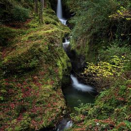 Poulanass Waterfall - Niall Whelan