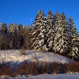 Michael Morse - Powdered Pines
