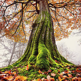 Power of Roots by Svetlana Sewell