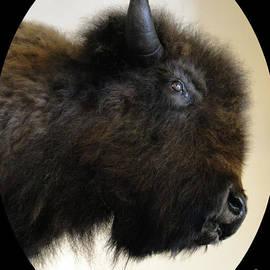 Al Bourassa - Prairie Bison III