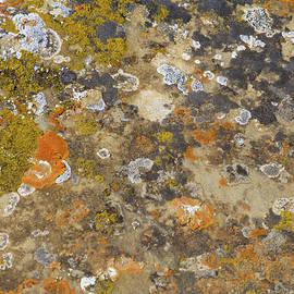 Prairie Pattern by Cris Fulton