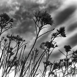 Jim Garrison - Prairie Skies