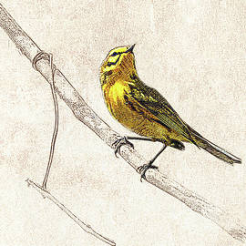 Prairie Warbler Photographic Drawing by Dawn Currie