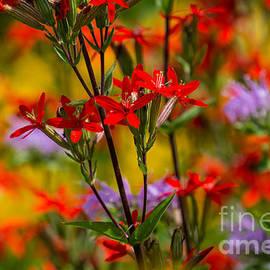 Fiona Craig - Prairie Wildflowers 1