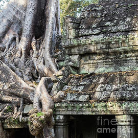 Rick Piper Photography - Preah Khan Roots and Stone 02