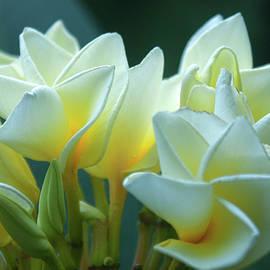 Maria Keady - Precious Pinwheels