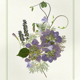 Pressed Dried Flower Painting - Blue Hydrangeas Morning Glory Lavender Ferns by Audrey Jeanne Roberts