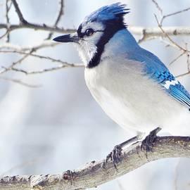 Lori Frisch - Pretty In Blue