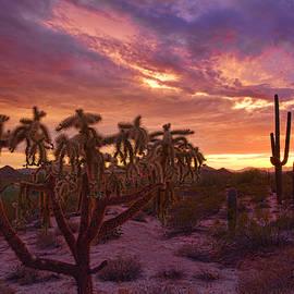 Saija  Lehtonen - Pretty in Pink Desert Skies