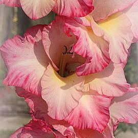 Dora Sofia Caputo Photographic Design and Fine Art - Pretty in Pink - Gladiola