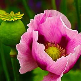 Pretty in Pink by Loretta S
