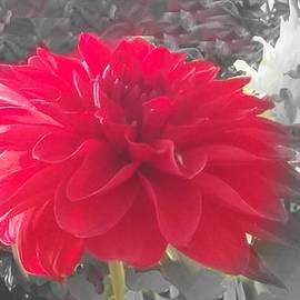 Nilu Mishra - Pretty
