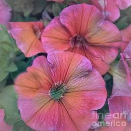 Luther Fine Art - Pretty Pink Petunia Art