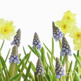 Ann Garrett - Pretty Spring Flowers All in a Row