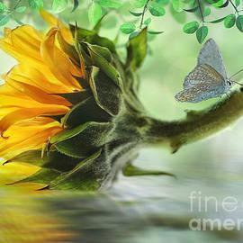 Nina Bradica - Pretty Sunflower