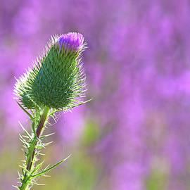 Nina Stavlund - Prickly Beauty..