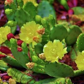 Prickly Pear Cactus by Cynthia Guinn