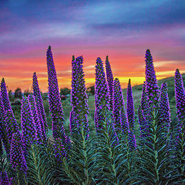 Pride of Madeira Sunset by Lynn Bauer