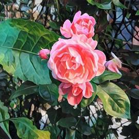 Miriam Danar - Prisoner of the City - Backyard Beauty Series - Flowers