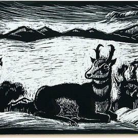 Pronghorn Buck Resting by Dawn Senior-Trask