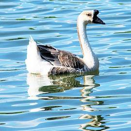 Mary Ann Artz - Proud Chinese Goose