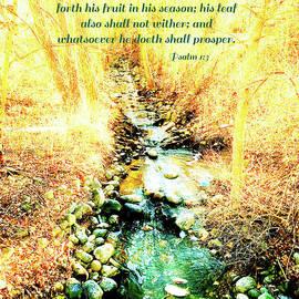 Debbie Nobile - Psalm 1 v 3