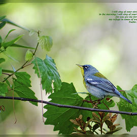Psalm 59 16 by Dawn Currie