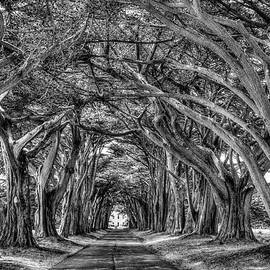 Pt.Reyes Cypress Tree Tunnel by Soroush Mostafanejad