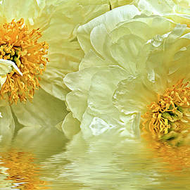 Geraldine Scull - Puddle of peonies